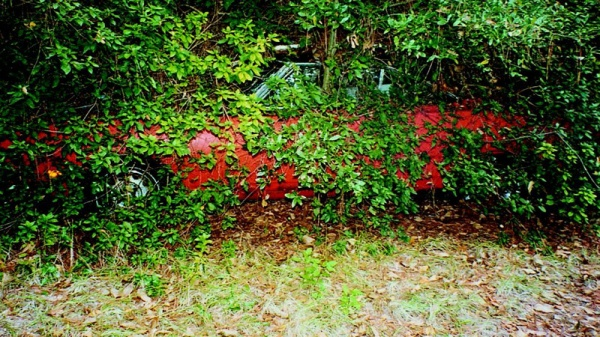 Superbird-in-the-bushes