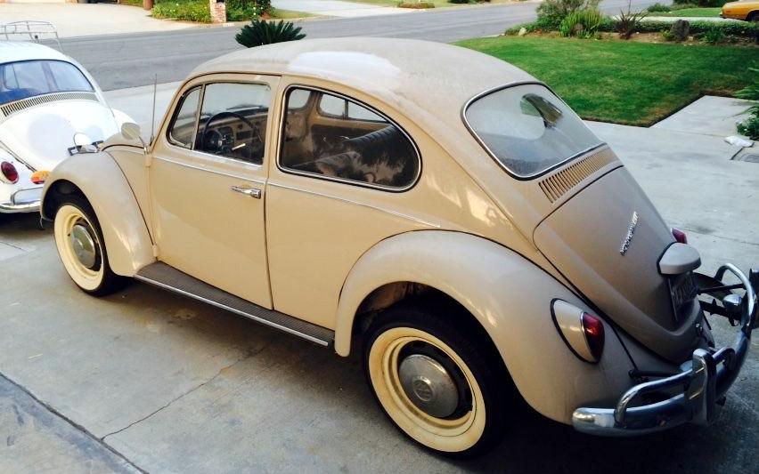 VW Beetle Survivor