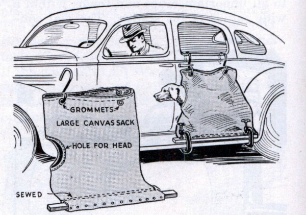 dog_car_sack