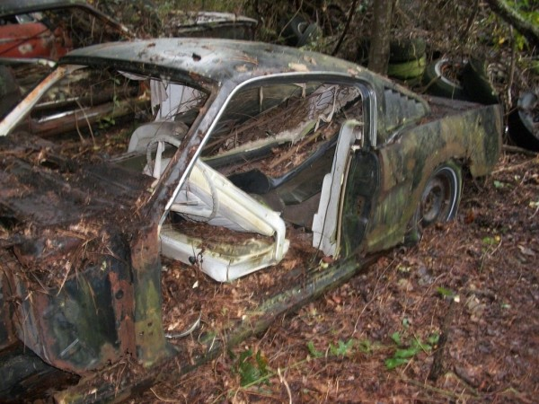 '65 Mustang forest find white intr.