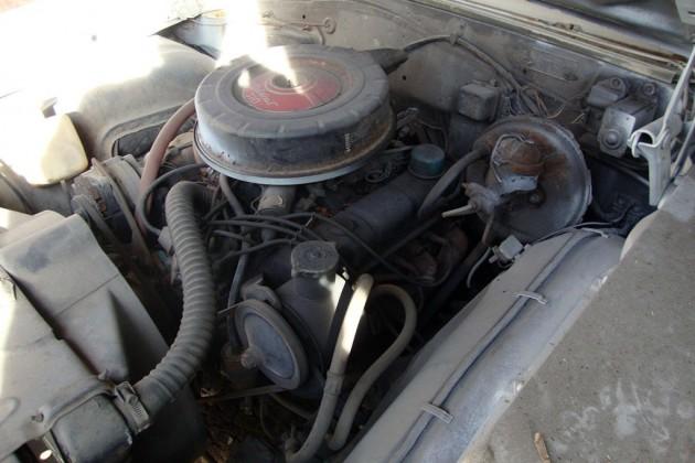 Wildcat 310 V8