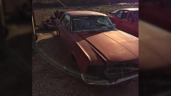 Rough Mustang