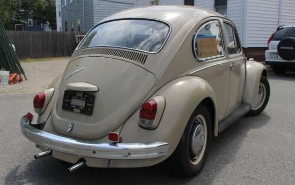 beetle-backside
