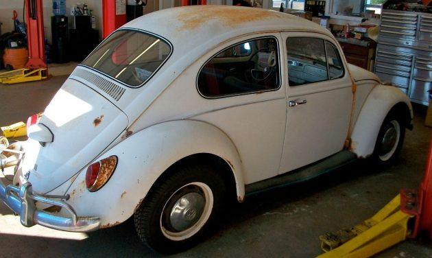 beetle7